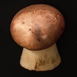 grzyb shitake